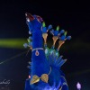 carnaval-nuit-2020-2-14